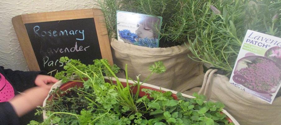 Dalkeith ELC sensory garden 904x403