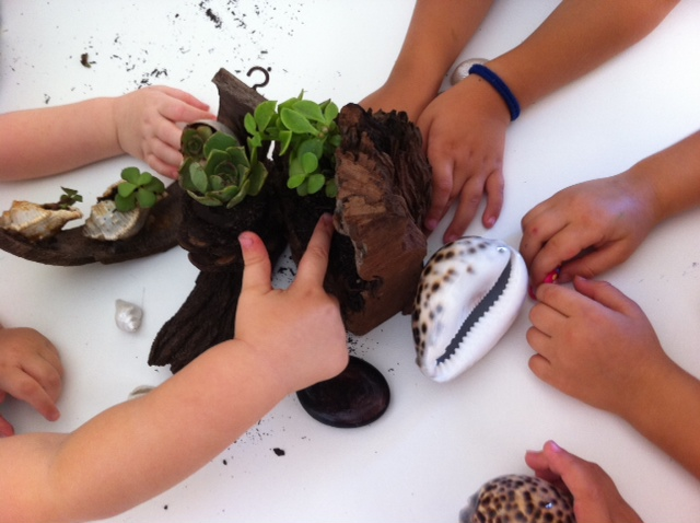 Our Toddlers enjoyed learning about these special succulent plants, shells and wood.